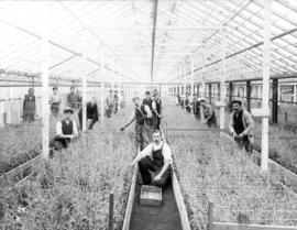 [Interior of carnation greenhouse with Brown Bros. Florists' staff]