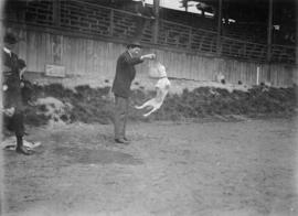 Man with a ball and a jumping dog