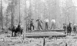 [Men of Crow's Nest Pass Lumber Co. skidding logs]