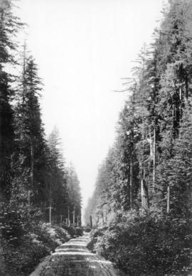 "[View of the ""Green Timbers"" on Yale Road (Pacific Highway)]"