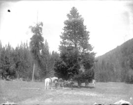 [Unidentified group with pack horses]