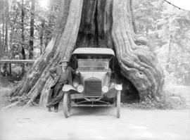 [Man standing next to car backed into Hollow Tree at Stanley Park]