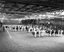 Showmanship - 13 years old - final placing : [1955 P.N.E. Junior Farmers competition in Livestock...