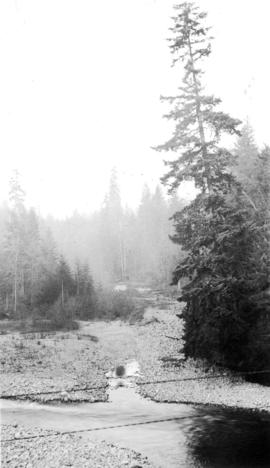 View of a stream and trees