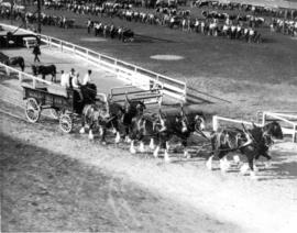 Six-horse draft team pulling Mainland Transfer Co. wagon on Hastings Park race track