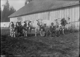 Men with cattle