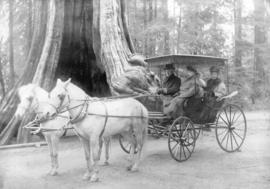 [A horse-drawn carriage in front of the Hollow Tree]