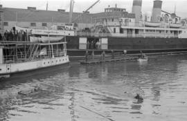 [Horse in the water near Union Steamship dock]