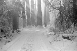"[A snow covered road leading to the ""Seven Sisters""]"