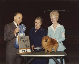 Best Puppy in Show award being presented at 1976 P.N.E. All-Breed Dog Show [Pomeranian]
