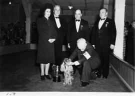 Presentation of trophy to winning entry [Cocker Spaniel?] in dog show