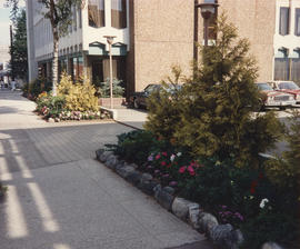 Final pictures [of new gardens at 1477 West Pender Street]