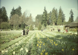 Stanley Park, visitors and rows of flowers in garden
