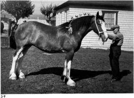 Horse from Colony Farm of Essondale, B.C.