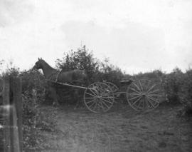 [A horse-drawn buggy at Leamy and Kyle Sawmill]