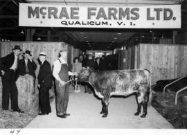 Cattle owned by McRae Farms of Qualicum, B.C.