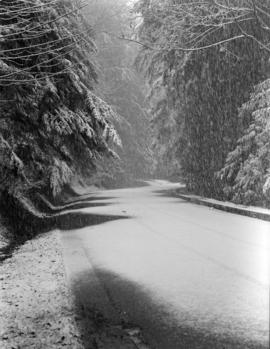 [The road through Stanley Park photographed in the snow]