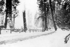 [A snow-covered road in Stanley Park]