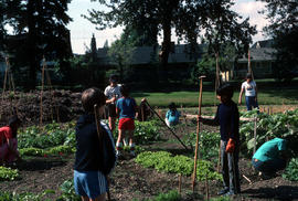 Education : children vegetable garden