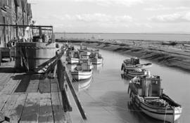 [Fishing boats moored in the Fraser River]