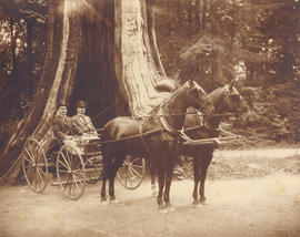 [Dominic and Pat Burns in a horse-drawn carriage in front of the Hollow Tree]