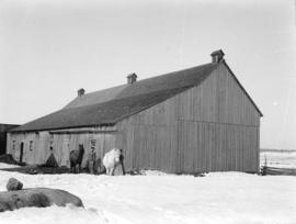 [Man and woman standing with two horses in front of barn]