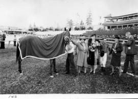 Prize presentation to winning race horse