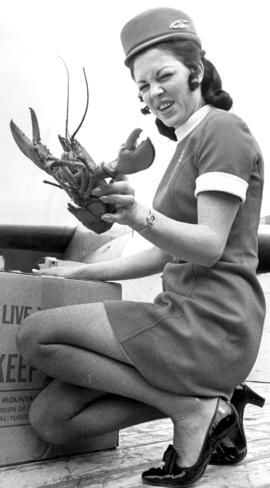 Air Canada flight attendant, Judi Robertson, holding live lobster