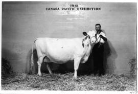 Man with white cow in Livestock building