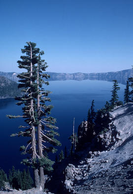 Habitat : Crater Lake S[outh] shore