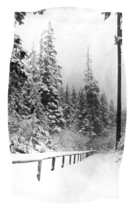 [Snow-covered trail in Stanley Park]