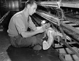 [B.C. Telephone technician wiring phone lines for new telephone system]