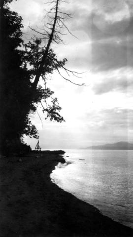 View of trees along a shoreline