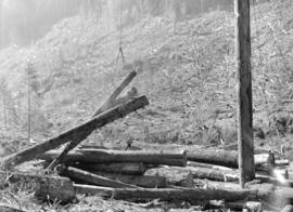 Logging activities at Youbou