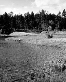 Surveyor's stakes show cut-off of Lost Lagoon.  Present road now curves almost through cente...