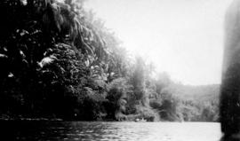[View of tropical trees from the] rapids, Manila