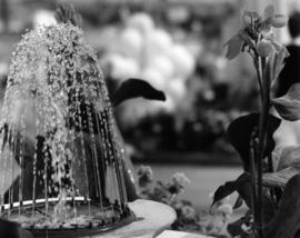 Fountain and flower