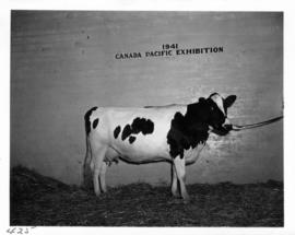 Cow in Livestock building