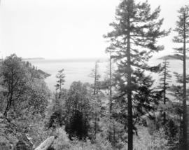 [View of Larson Bay looking south toward Batchelor Point]