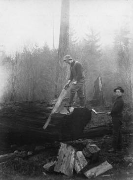 "This is ""some"" work [two men sawing fallen tree]"