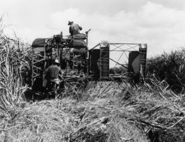 Harvesting cane with mechanical equipment