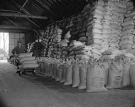 (Imperial) Salmon Cannery - [sacks of] fish meal from heads etc.