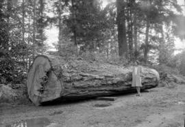 Douglas Fir Log near Qualicum