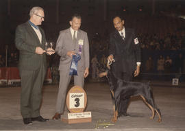 Group three [Working Group: Doberman Pinscher] award presented at 1975 P.N.E. All-Breed Dog Show