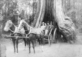 [Unidentified group in carriage in front of Hollow Tree]