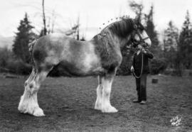 Radiance : [draft horse with handler]