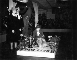Best dog award presentation at exhibition all-breed dog show [Pomeranian]