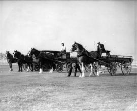 Teams of horses and wagons on display