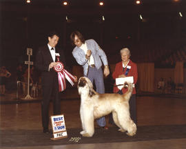 Best Canadian Bred in Show award being presented at 1974 P.N.E. All-Breed Dog Show [Afghan Hound]