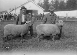 [Sheep at an exhibition]